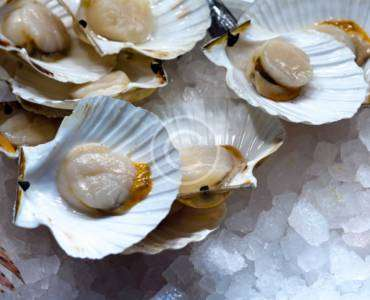 Raw Oysters on Half Shell